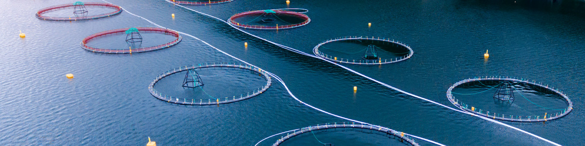 Xylem Analytics - aquaculture solutions